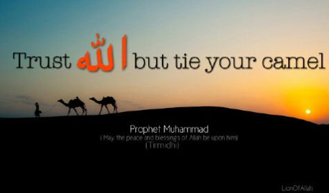hadits-tirmidzi-trust-allah-but-tie-your-camel-tawakal-ikhtiar
