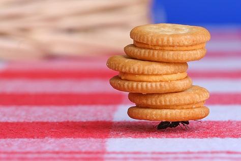 strong-ant-semut-kuat